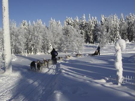 Wildnis-Abenteuer mit Huskies und Spa-Hotel